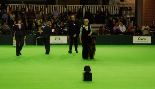 Crufts Obedience 07